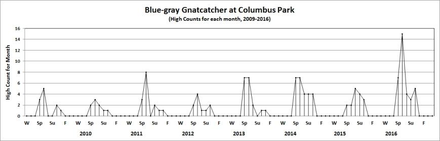 colbl-graygnatcatcher