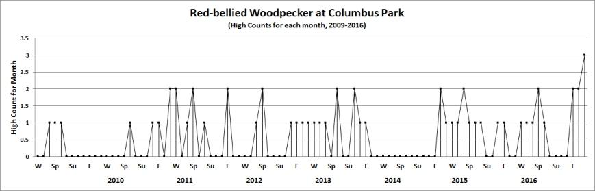 colred-belwoodpecker